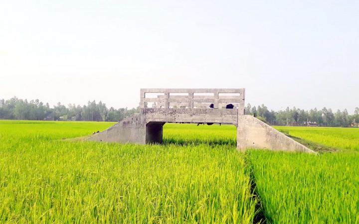 ভূঞাপুরে ফসলি জমিতে রাস্তা ছাড়াই সেতু