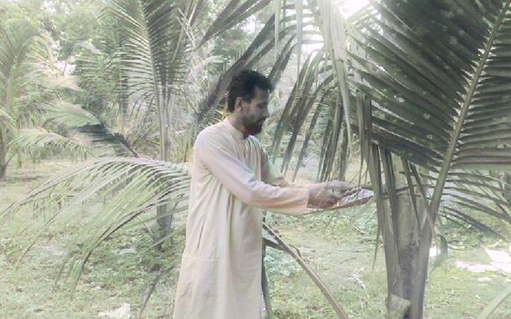 সখীপূরে নারকেলবাগান ঘিরে স্বপ্ন
